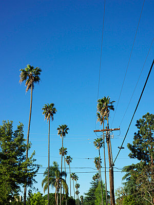 Low angle view of palm trees, Los Angeles, USA - p312m874446f by Pia Ulin