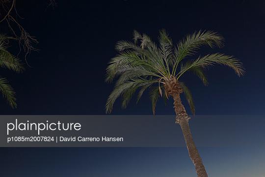 p1085m2007824 by David Carreno Hansen
