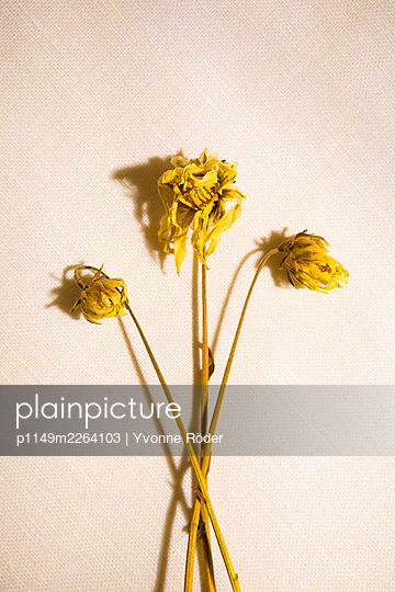 Withered flowers - p1149m2264103 by Yvonne Röder