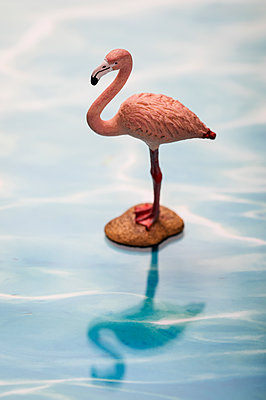 Toy flamingo - p788m1220753 by Lisa Krechting