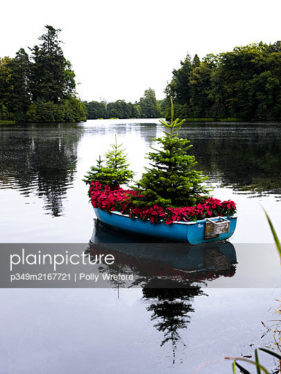 Christmas trees and Poinsettia in rowing boat on Scottish lake, UK - p349m2167721 by Polly Wreford