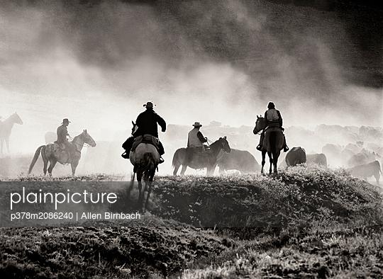 Cattle Drive   - p378m2086240 by Allen Birnbach