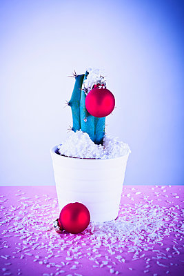 Christmassy cactus - p1149m2021585 by Yvonne Röder