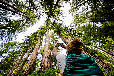 A man stands photographing the tall trees in a forest, Julia Pfeiffer Burns State Park; California, United States of America - p442m2019790 by Dean Blotto Gray