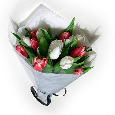 Tulips - p2686933 by Clara Ritz