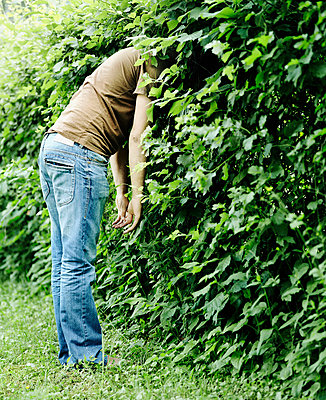 Side profile of a man hiding his head in the hedge - p3741513 by Lauri Rotko