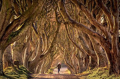 Young boy skateboarding through trees, Dark Hedges, Ballymoney, Northern Ireland, United Kingdom - p429m2019810 by George Karbus Photography