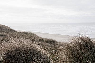 dune 1 - p1095m1515726 by nika