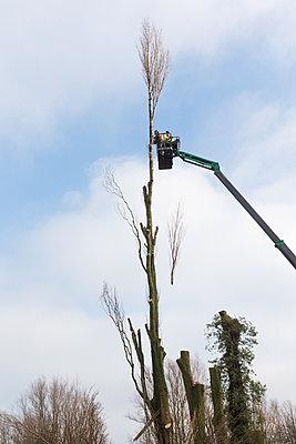 Pruning trees - p1231m2013528 by Iris Loonen