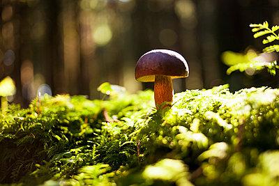 Pilz im Wald - p1386m1452186 von beesch
