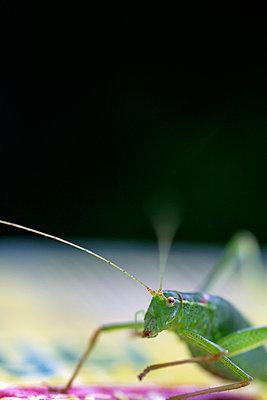 Grasshopper - p739m931407 by Baertels