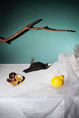 Quitte und toter Vogel - p1097m865941 von Mélanie Bahuon