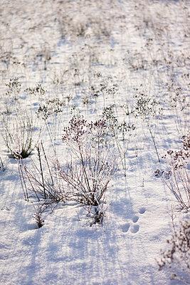 Winterpflanze - p1380m1441756 von van Dowski