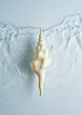 Shell and wave, top view - p1652m2257771 by Callum Ollason