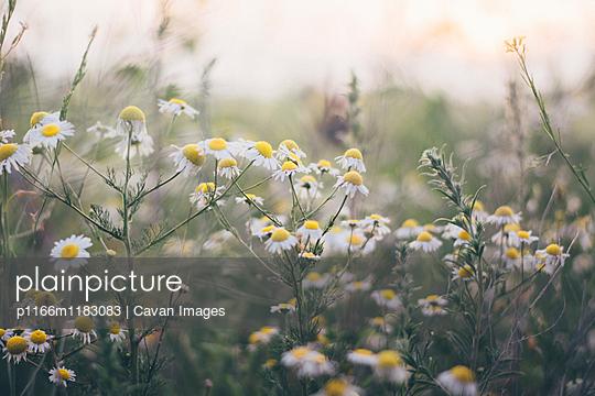 p1166m1183083 von Cavan Images