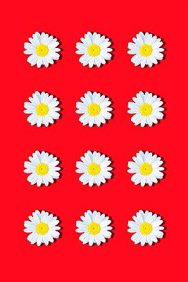 Marguerites - p1149m2187960 by Yvonne Röder