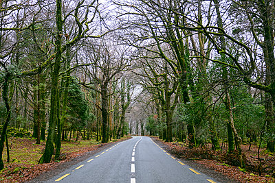 Road through killarney national park, Co. Kerry, Ireland, Europe, 2018 - p1362m2028912 by Charles Knox