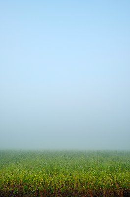 Potato field in heavy fog, Amsterdam, Noord-Holland, Netherlands - p429m1084611 by Mischa Keijser