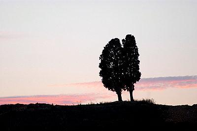 Zypressen im Gegenlicht - p8290034 von Régis Domergue