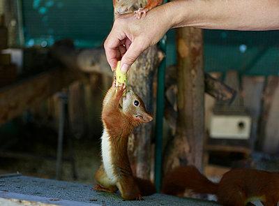 Hand feeding a squirrel - p1221m1488244 by Frank Lothar Lange