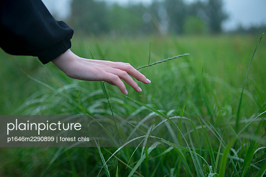 Woman touching blades of grass - p1646m2290899 by Slava Chistyakov