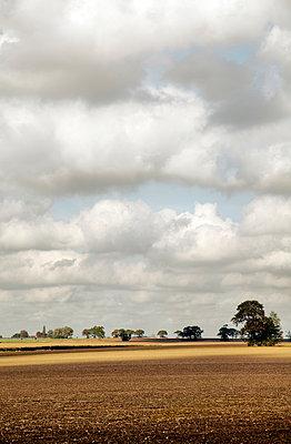 Felder mit Bäumen - p1248m1045194 von miguel sobreira