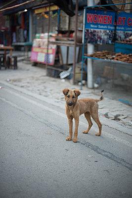 Straßenhund in Indien - p1509m2116734 von Romy Rolletschke