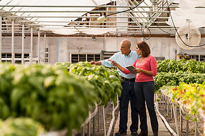 Couple checking green basil plants in greenhouse - p555m1305379 by Mark Edward Atkinson/Tracey Lee