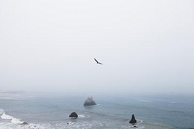 Pacific Ocean - p1095m1508030 by nika