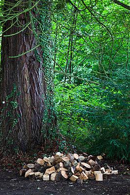 A Pile Of Cut Wood At The Base Of A Tree In A Forest; Inverness Scotland - p442m748665f by John Short