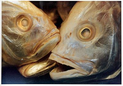 Fisch - p1205m1020922 von Annet van der Voort