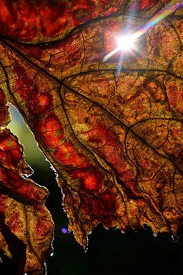 Autumn Foliage - p067m1068342 by Thomas Grimm