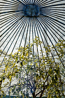 Tree under a dome - p445m1552783 by Marie Docher