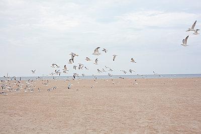 Flights of seagulls - p1513m2043923 by ESTELLE FENECH