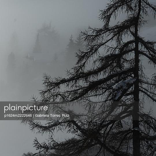 Switzerland, Tree in fog - p1624m2222646 by Gabriela Torres Ruiz
