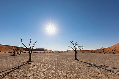 Africa, Namibia, Namib-Naukluft National Park, Deadvlei, dead acacia tree in clay pan - p300m2024040 by Fotofeeling