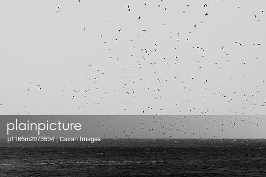 p1166m2073594 von Cavan Images
