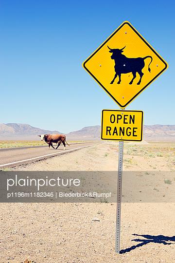 Kuh auf dem Extraterrestrial Highway - p1196m1182346 von Biederbick & Rumpf