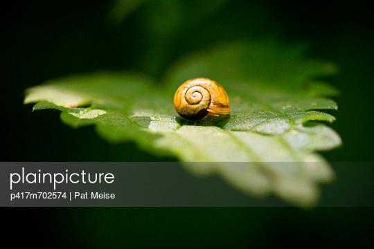 Kleine Schnecke - p417m702574 von Pat Meise