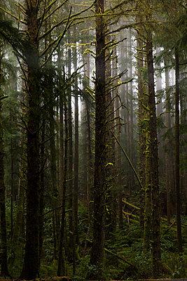Thick forest, Oregon, USA - p756m2053404 by Bénédicte Lassalle