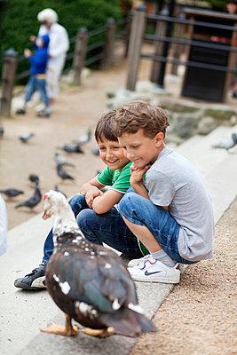 Boys looking at duck - p4268712f by Adam Haglund