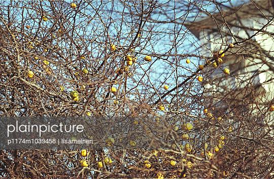 Apfelbaum - p1174m1039458 von lisameinen