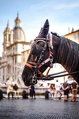 Piazza Navona und Pferd - p1275m1591721 von cgimanufaktur