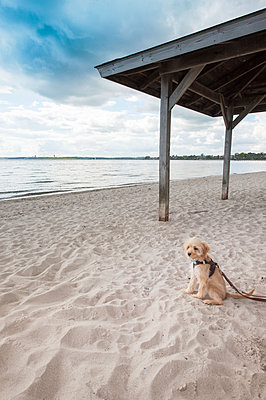 Hund allein am Strand - p299m1057724 von Silke Heyer