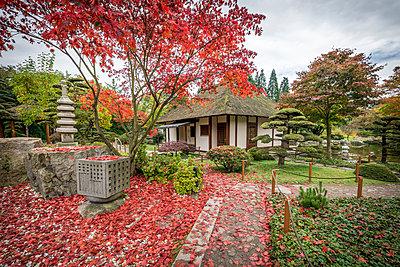 Germany, Hamburg, Planten un Blomen, Japanese Garden in autumn - p300m1536921 by Kerstin Bittner