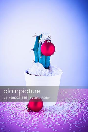 Weihnachtlicher Kaktus - p1149m2021585 von Yvonne Röder