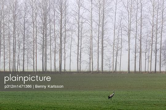 p312m1471386 von Benny Karlsson