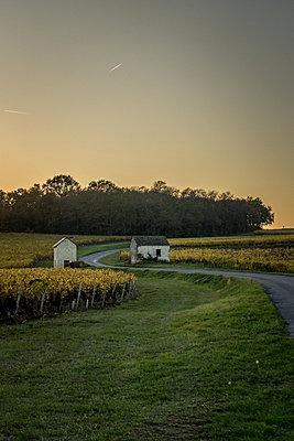 Vine houses - p1402m2031286 by Jerome Paressant