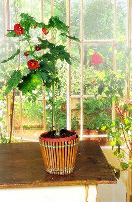 Topfpflanze - p1650205 von Andrea Schoenrock