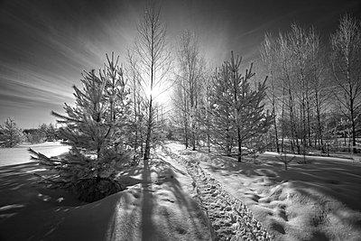 Russischer Winter - p1653m2232299 von Vladimir Proshin